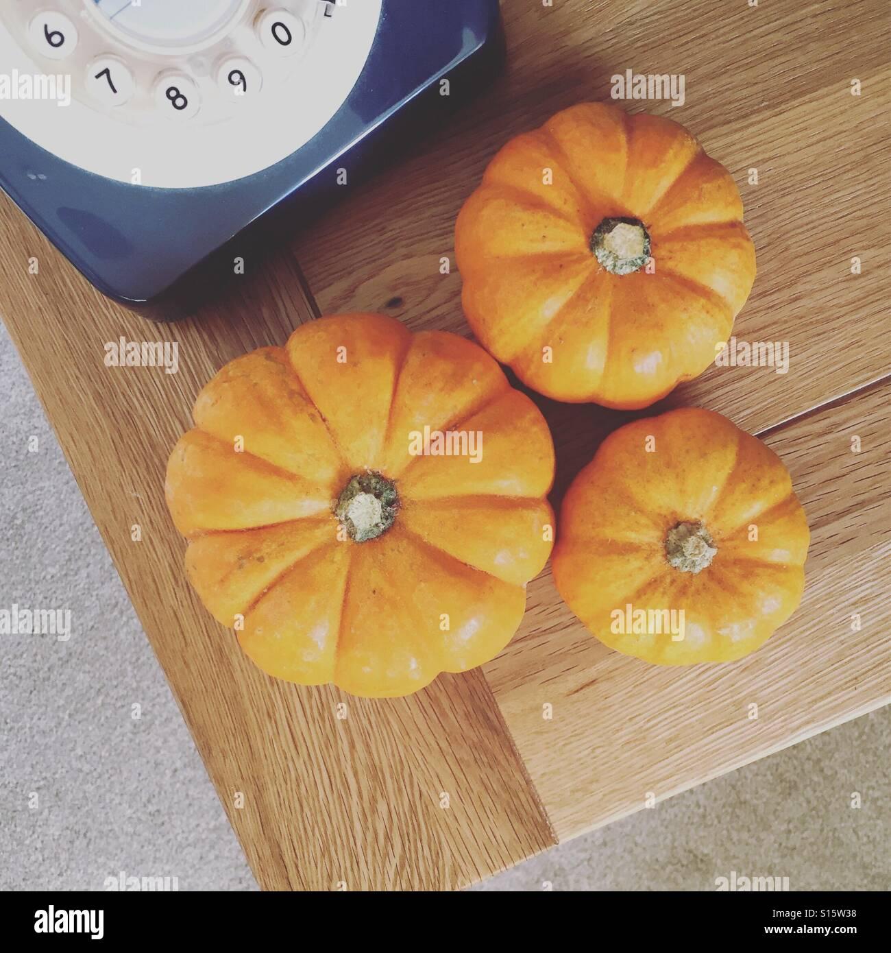 Munchkin pumpkins - Stock Image