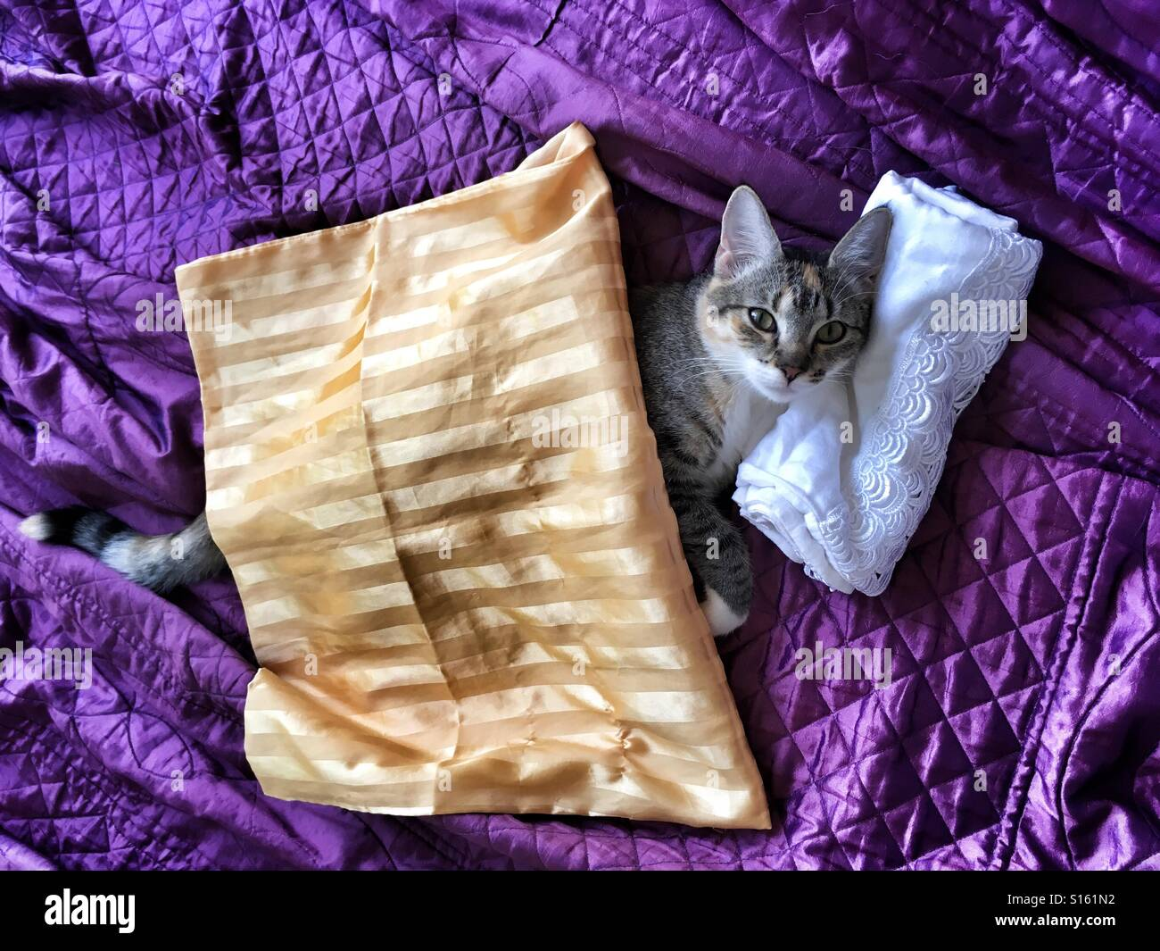 Cat in bed. - Stock Image