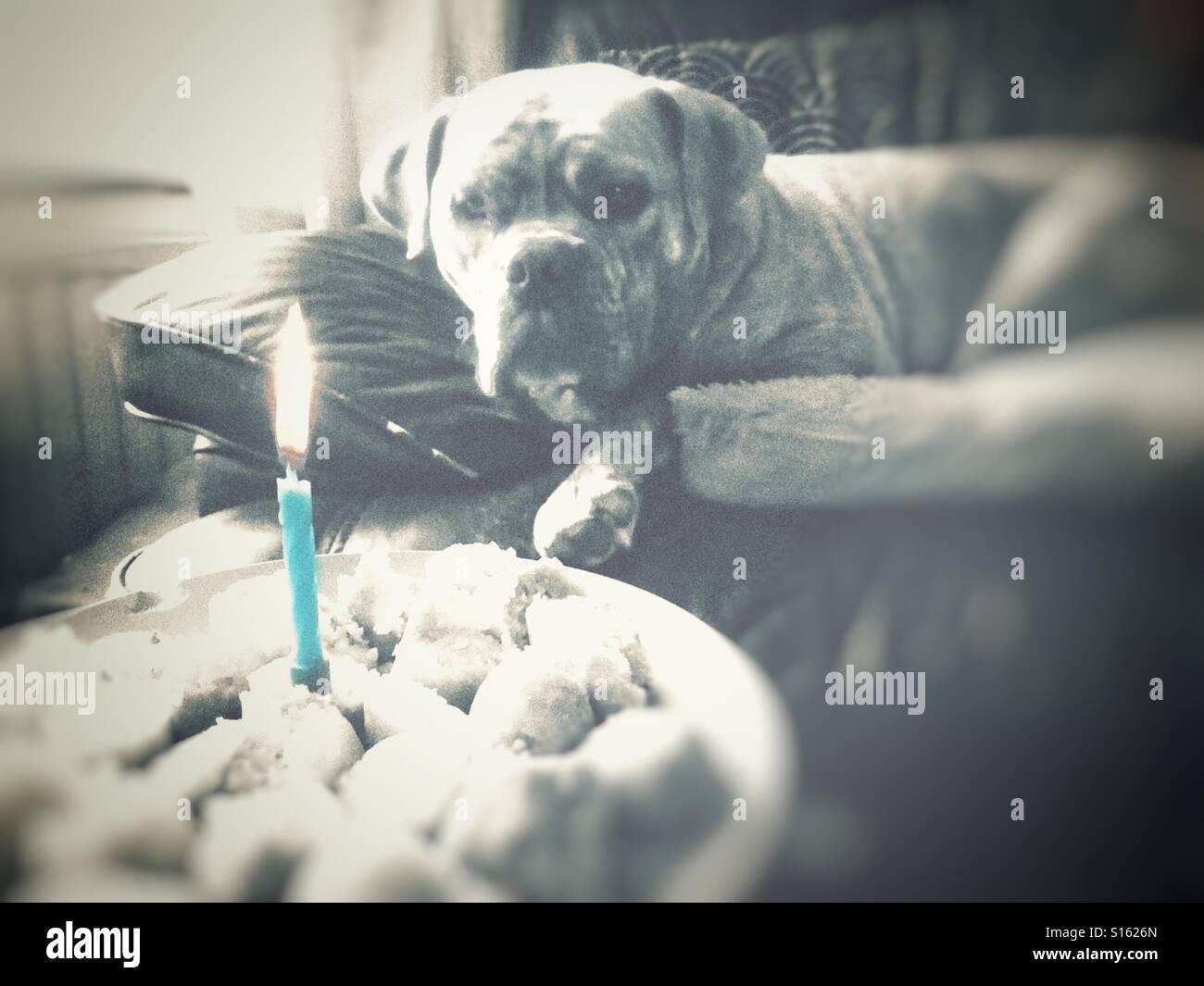 Dog Birthday Cake Stock Photos Dog Birthday Cake Stock Images
