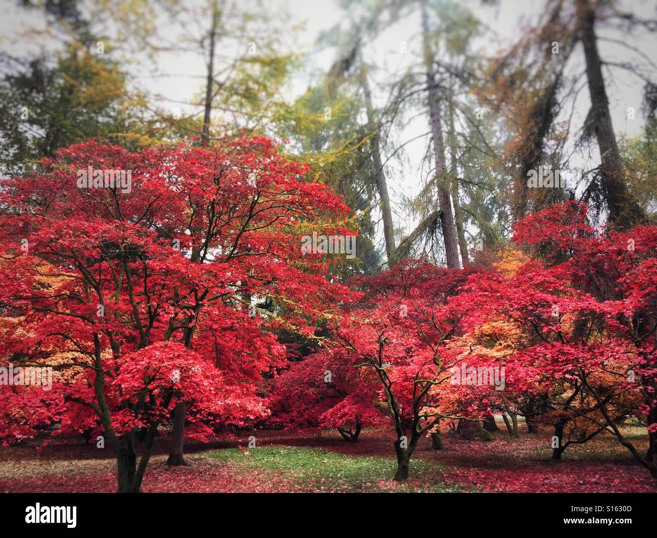 Autumnal trees at Arboretum Stock Photo
