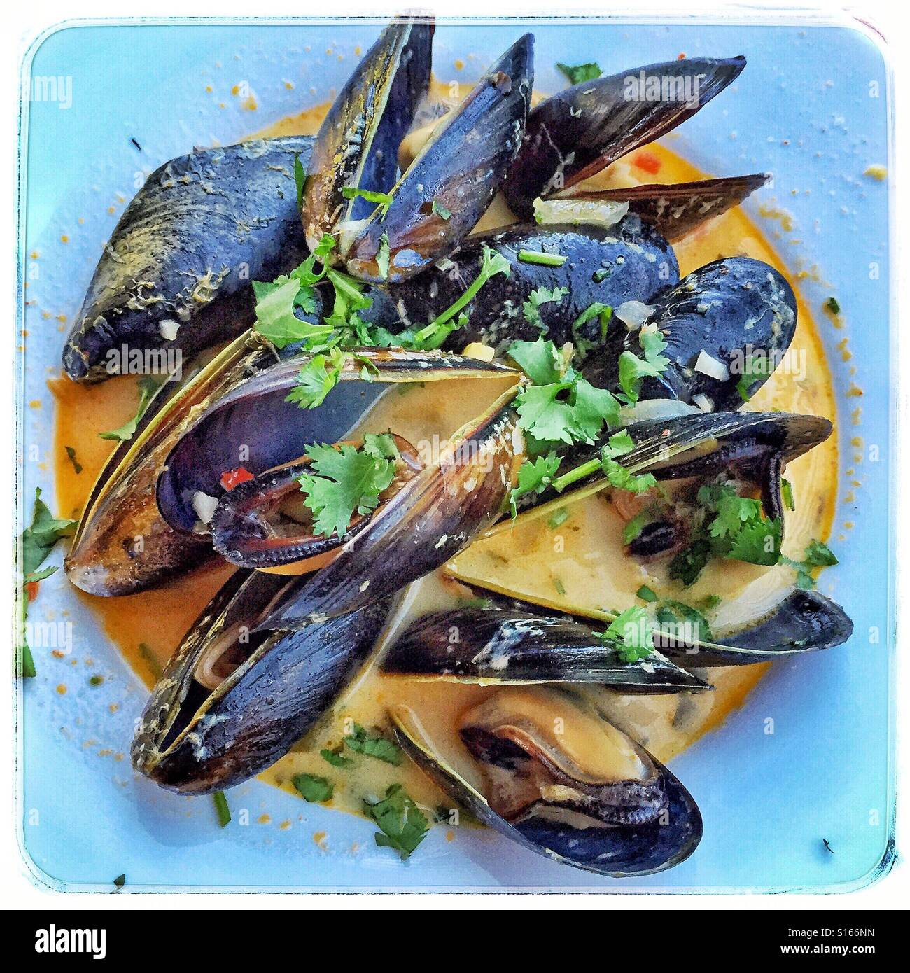 Fresh mussels cooked in a delicious Thai curry sauce. - Stock Image