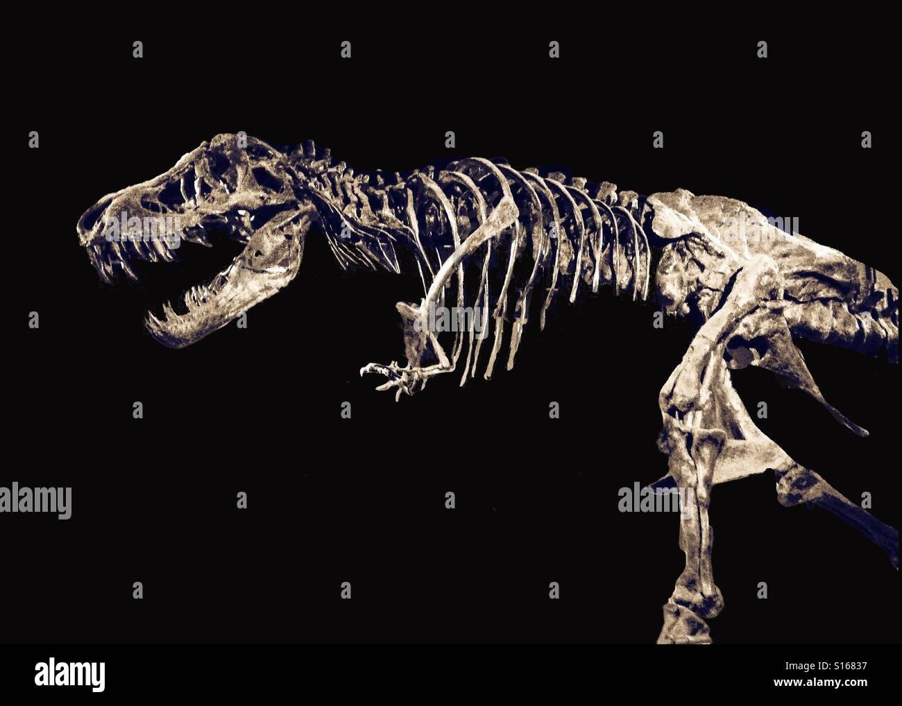 T-rex - Stock Image