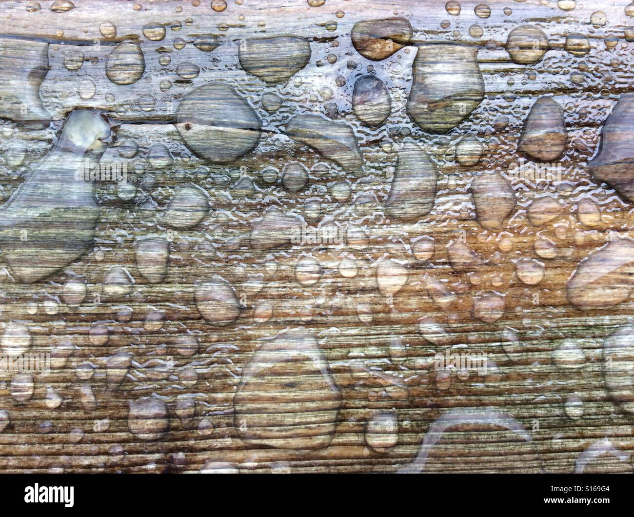 Surface tension of the water forming bubbles on weathered board - Stock Image