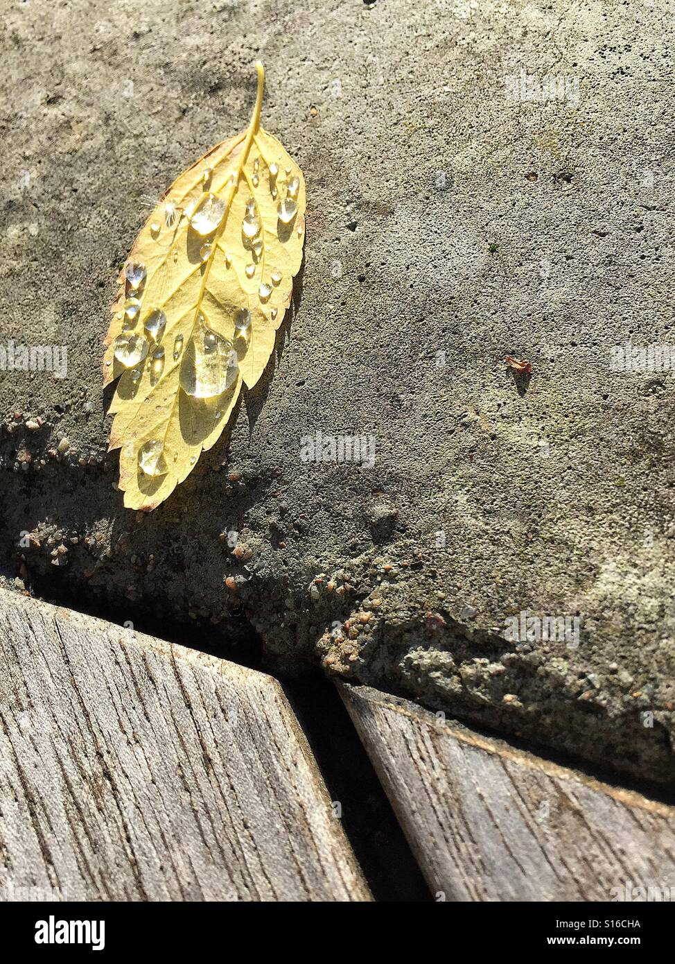 A teary leaf on a cold concrete ground. - Stock Image