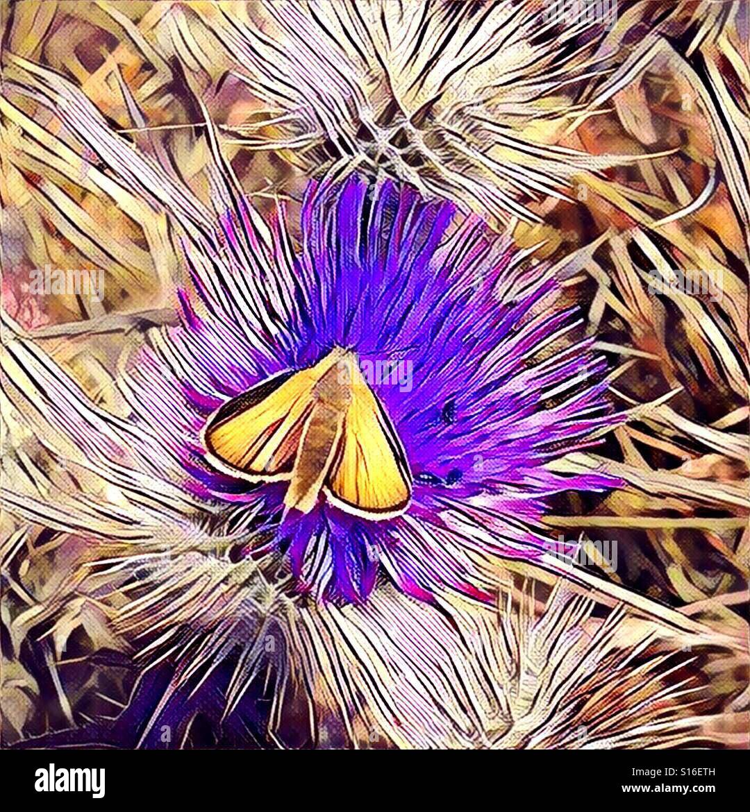 Moth butterfly painterly graphic illustration thistle wildflowers - Stock Image