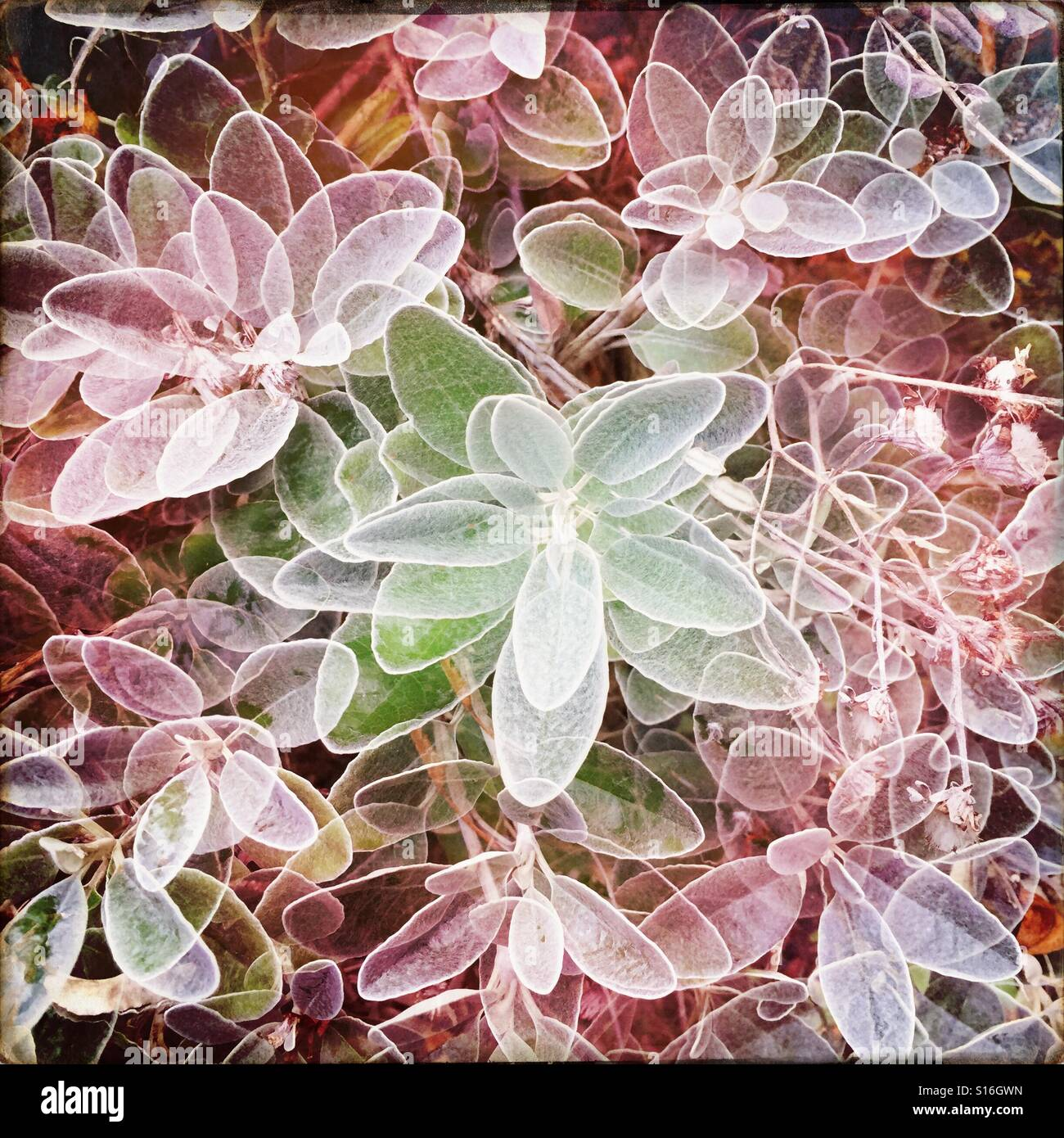 duble exposure , plant Stock Photo
