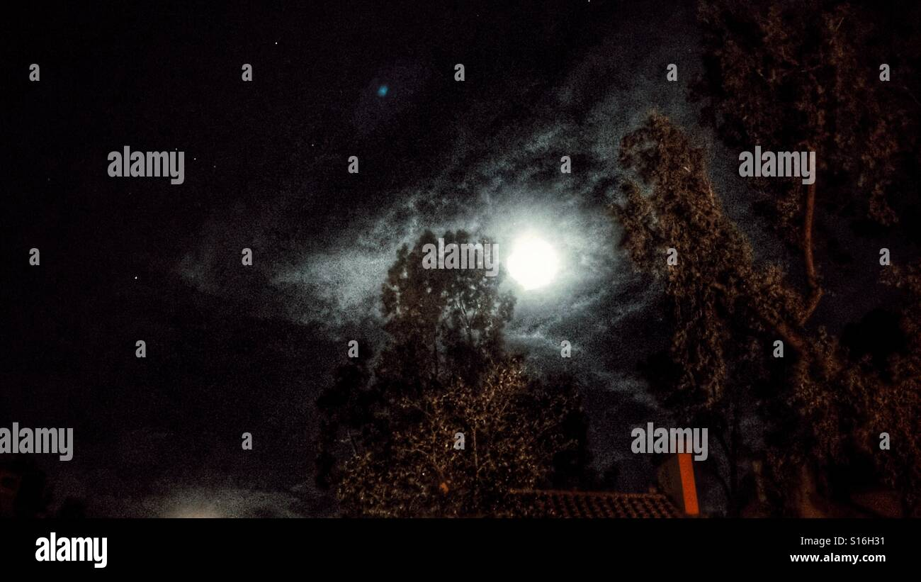 Moonshine over the Eucalyptus trees - Stock Image