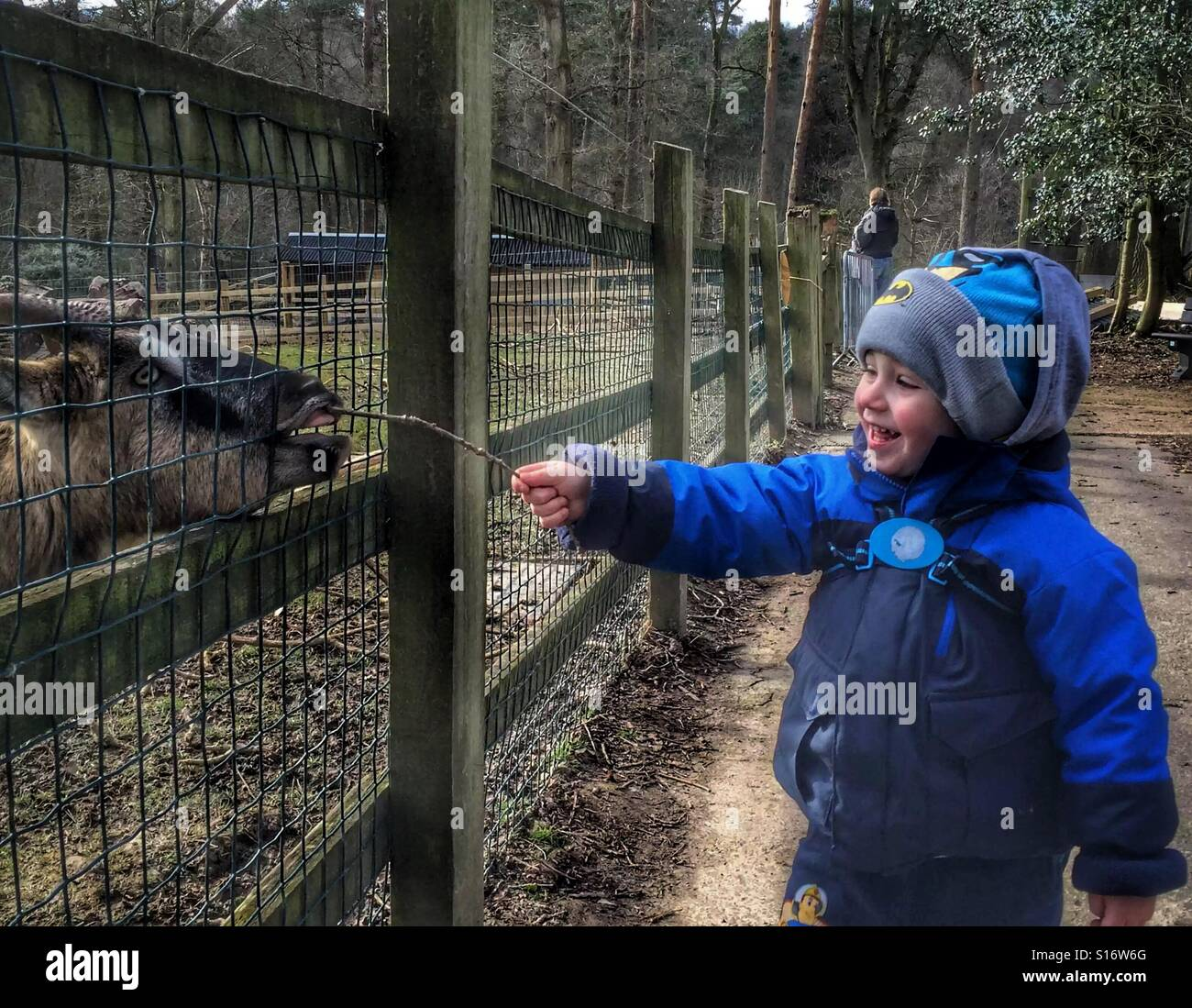 Young lad feeding a goat with a twig - Stock Image