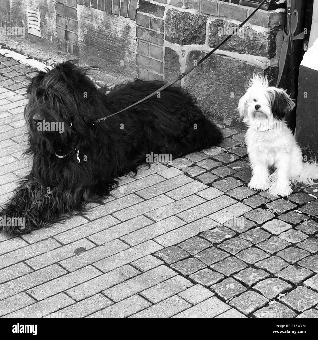 Two dogs waiting in front of a hairdresser, it seems they got one haircut themselves - Stock Image