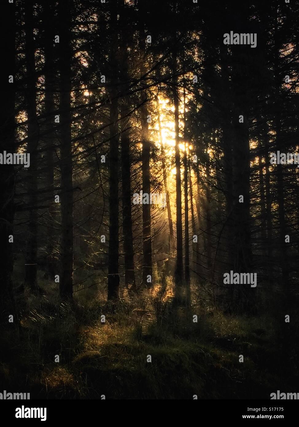 Sun bursting through trees. - Stock Image
