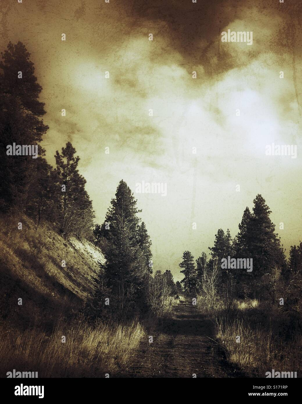 A trail in the forest, surrounded by evergreen trees. Distressed image in sepia tones. Stock Photo