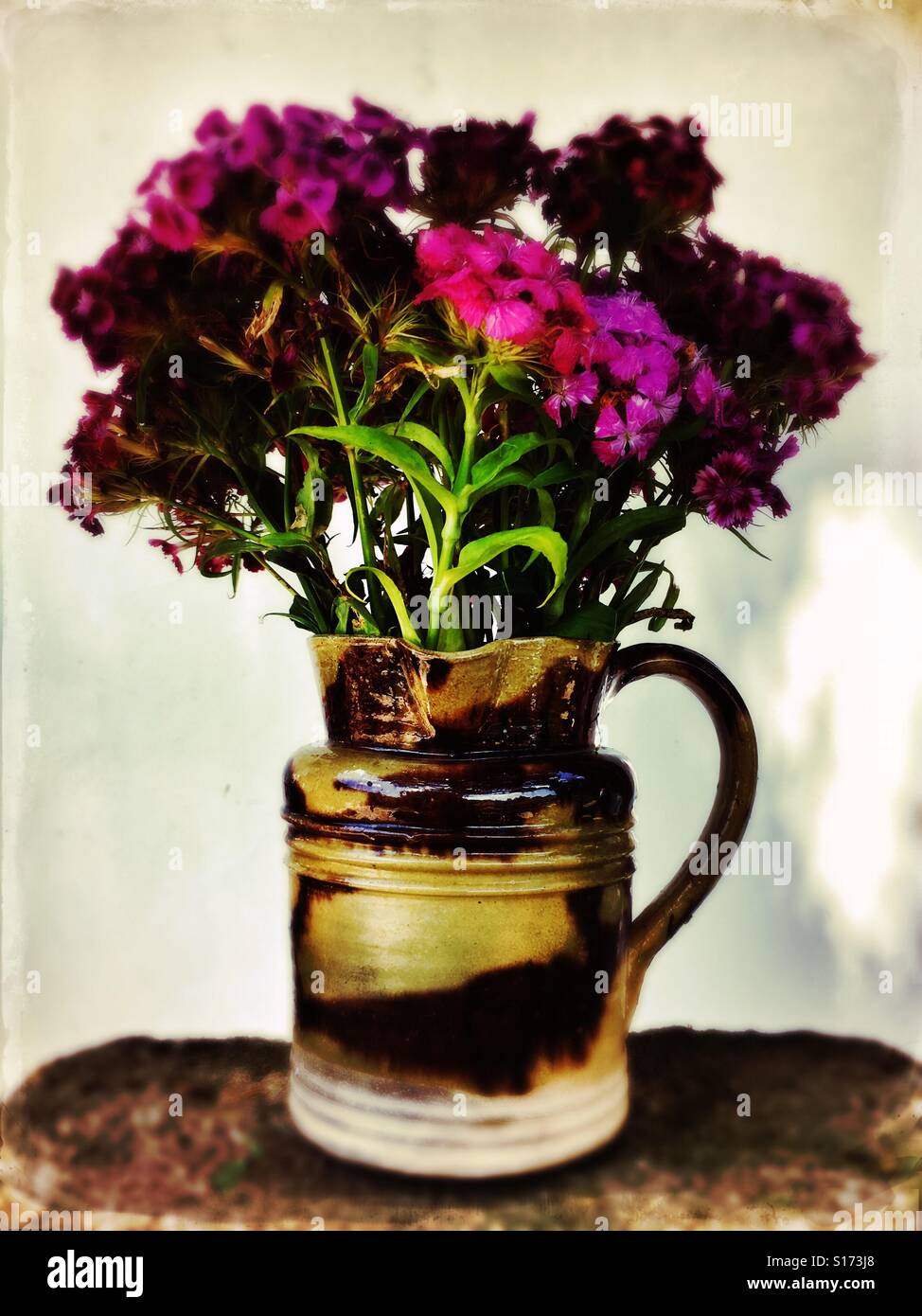 A jug of sweet williams - Stock Image