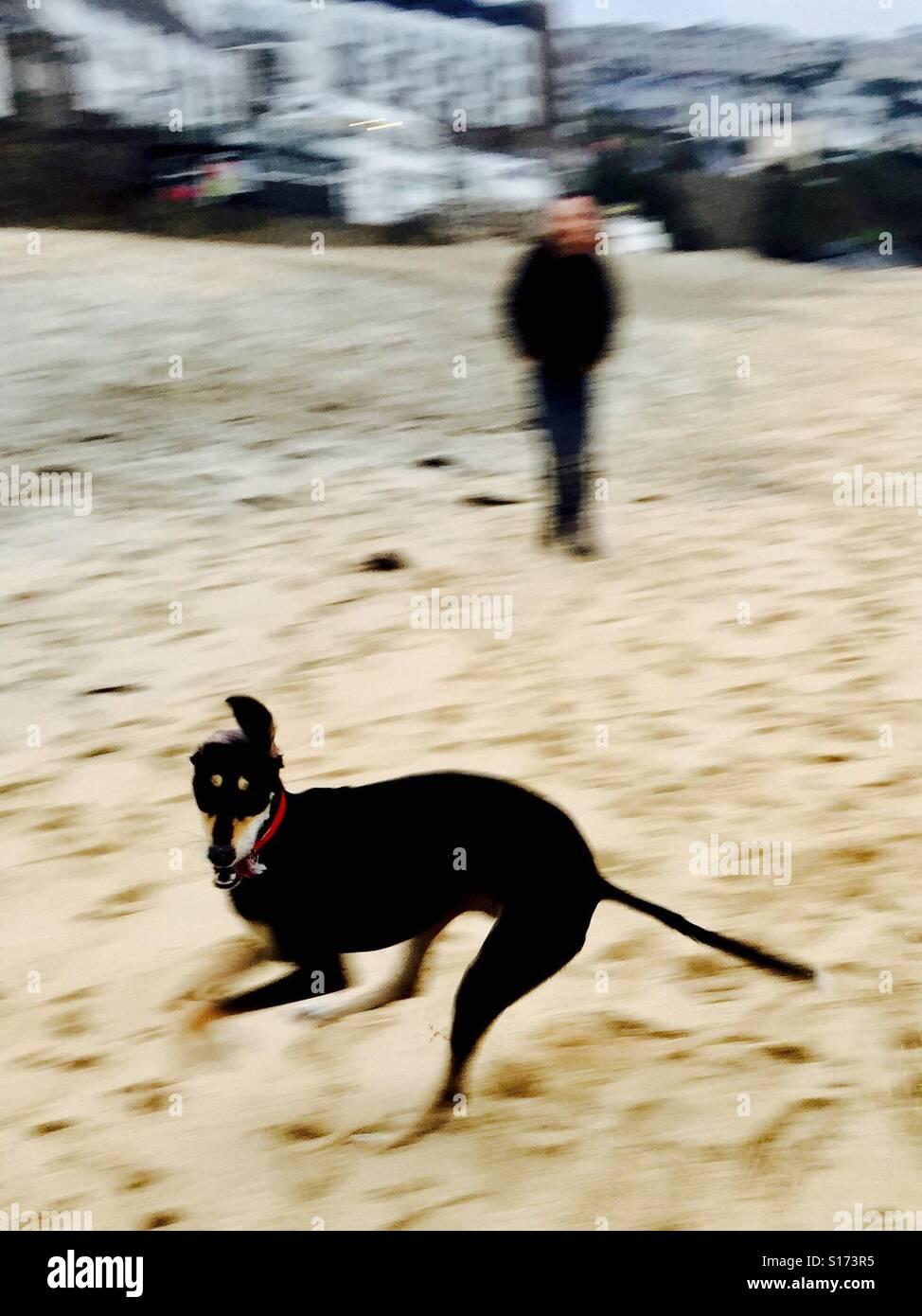 Happiness of beach dog walking. - Stock Image