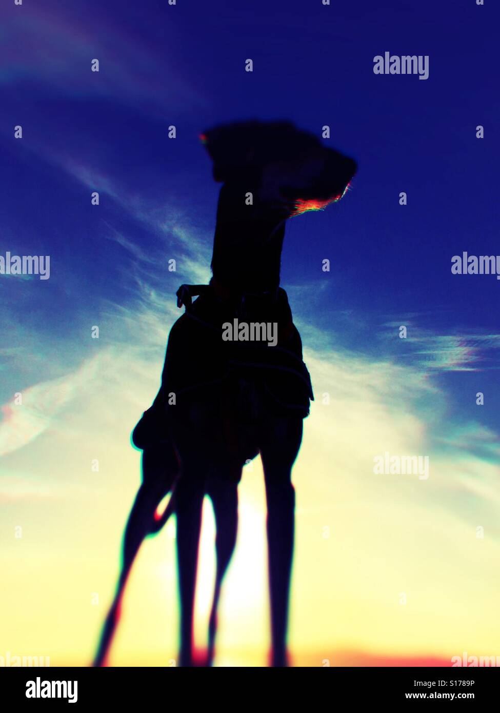 Superdog. - Stock Image