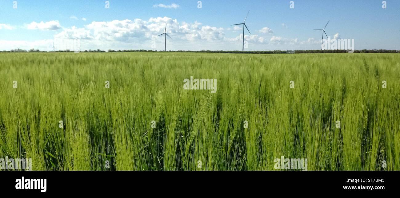 Wind turbines over green fields in Northeastern Bulgaria. - Stock Image