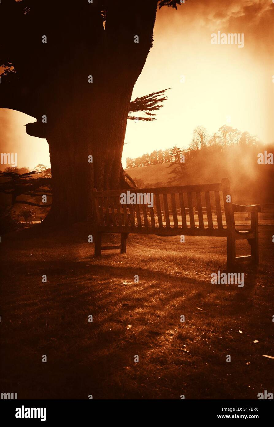 Bench by tree in low sun. - Stock Image