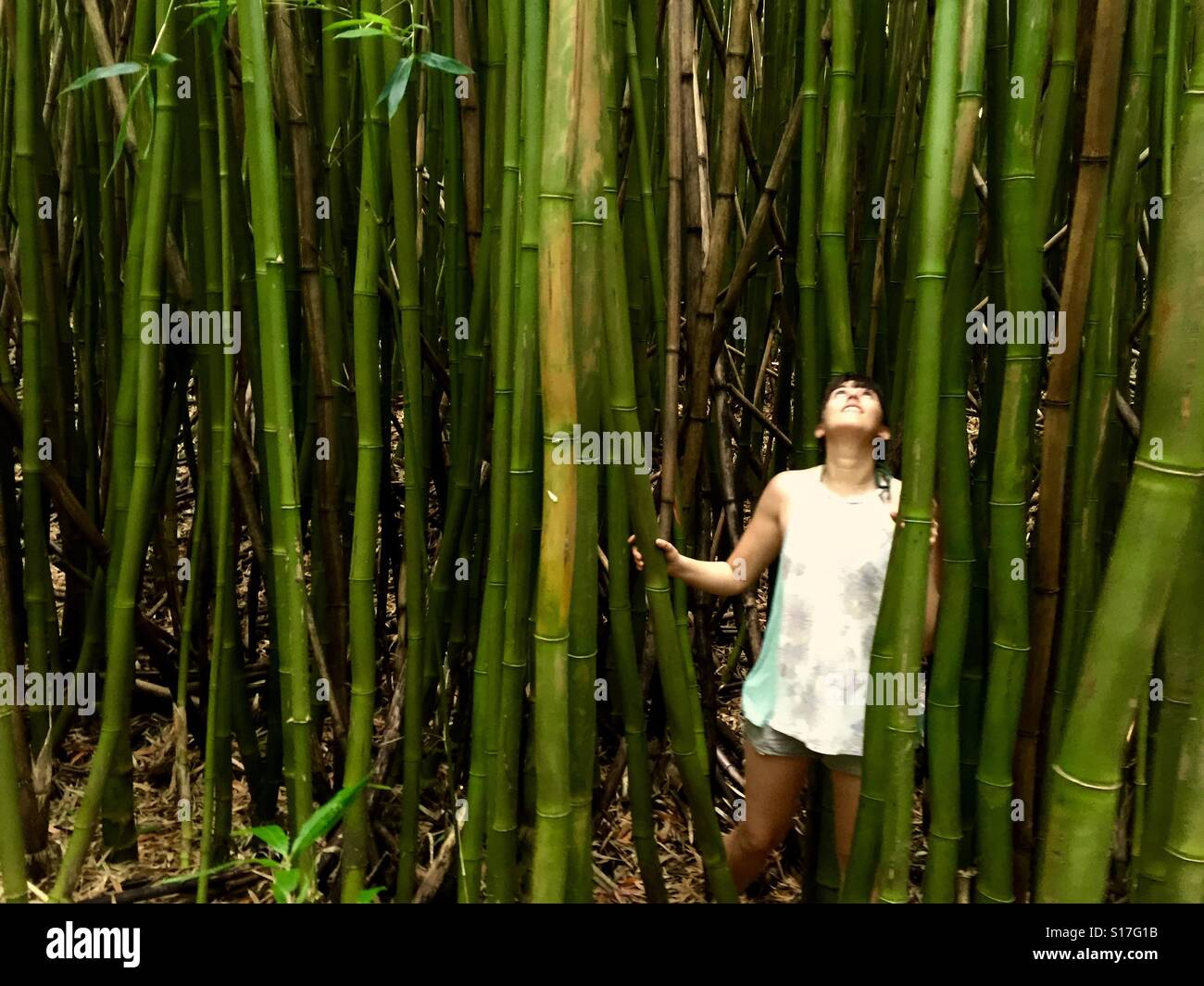 Wander in the bamboo forest Stock Photo