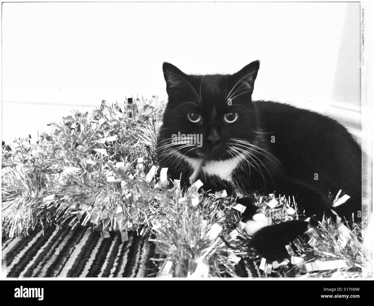 Black & white cat sitting on silver tinsel Stock Photo