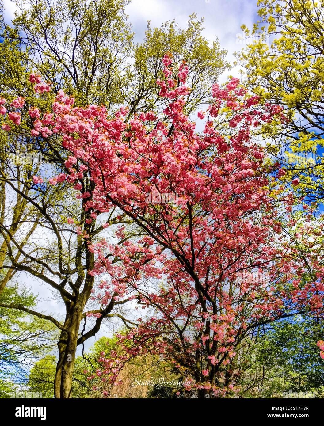 Spring Feelings - Stock Image