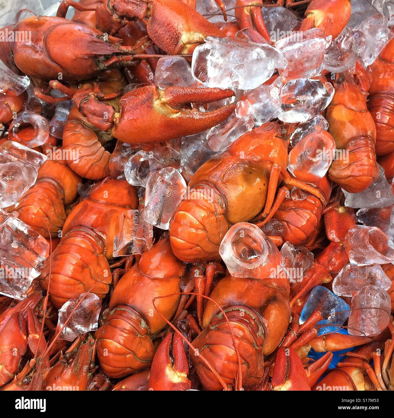 Crayfish on ice for sale at a local market - Stock Image