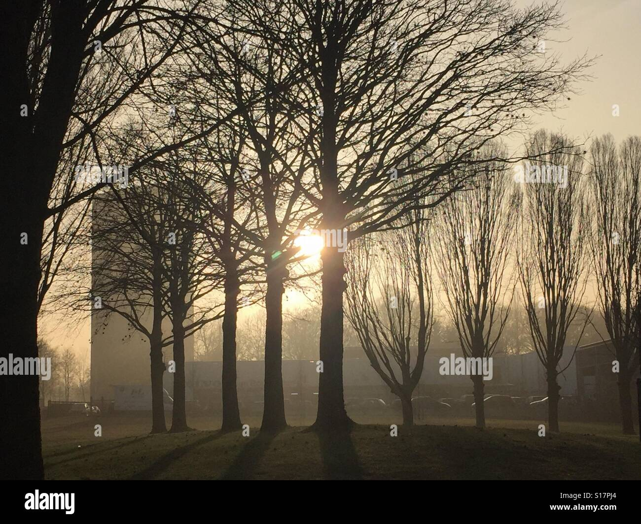 Winter sun shining through mist in wooded city scape - Stock Image