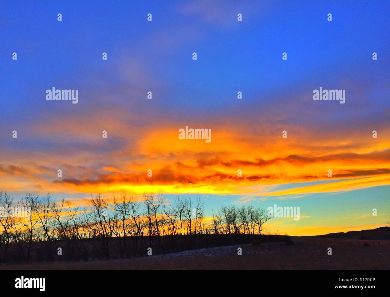 Grove of leafless trees in a winter sunset - Stock Image