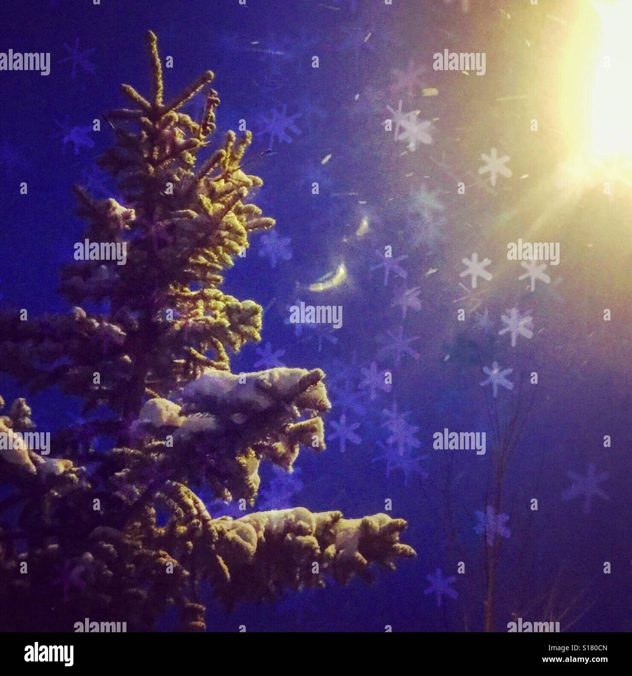 Looking up at an evergreen tree covered in fresh snow and illuminated by a street lights on a snowy night. Edit - Stock Image