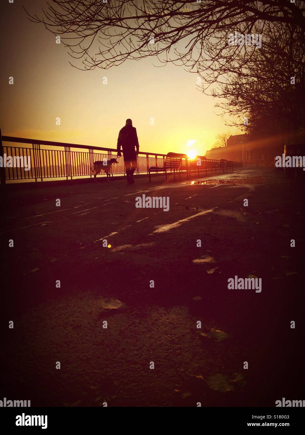 Dog walking on a winter pathway. - Stock Image