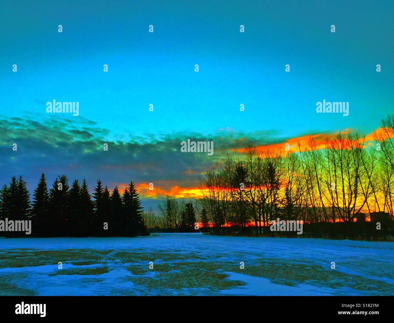 Snow on the ground with evergreens and leafless poplar trees and a winter sunrise - Stock Image