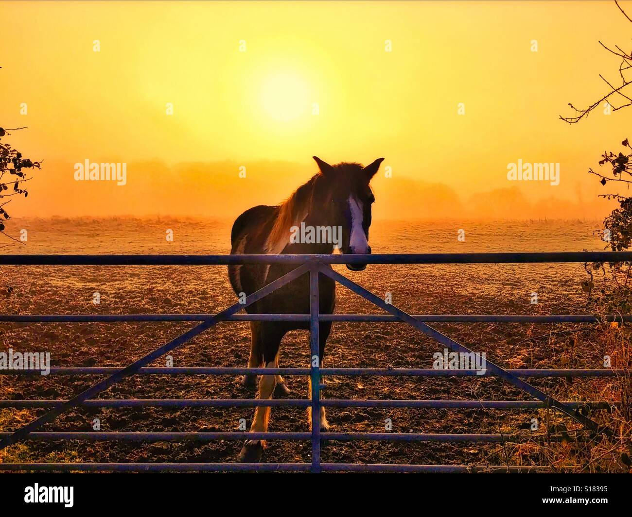 Horse in the morning light - Stock Image