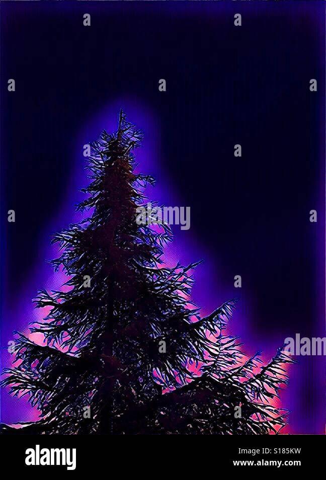 Evergreen tree against black sky - Stock Image