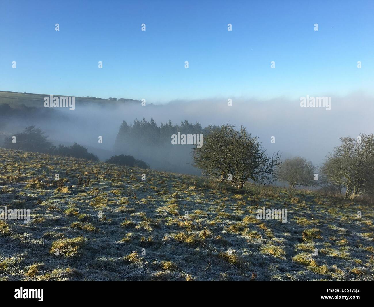 Above the fog level on the Berkshire downs with frost on the ground on a cold winter's day in December - Stock Image