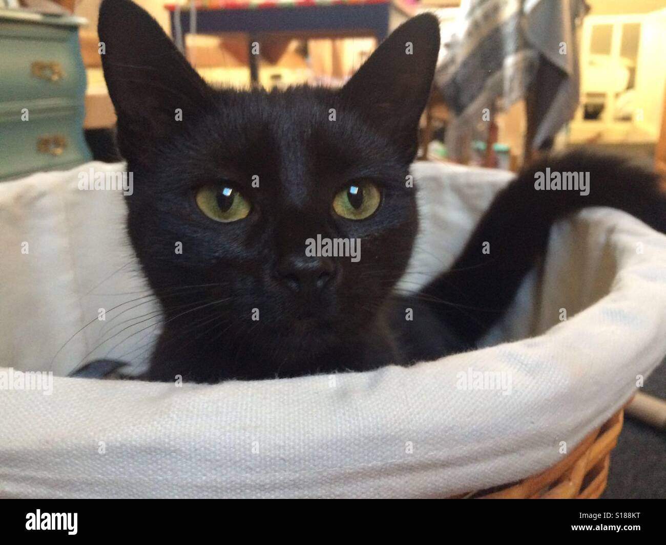 cat in laundry basket stock photos cat in laundry basket stock