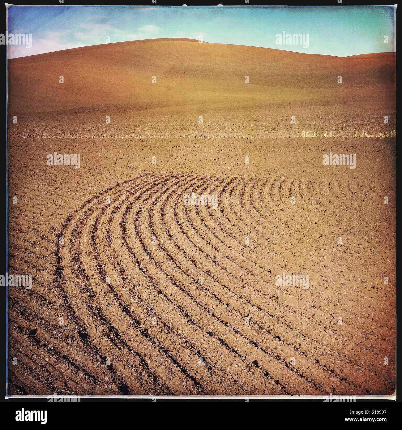 Plowed wheat field in late autumn in the Palouse region of Washington State, USA Stock Photo