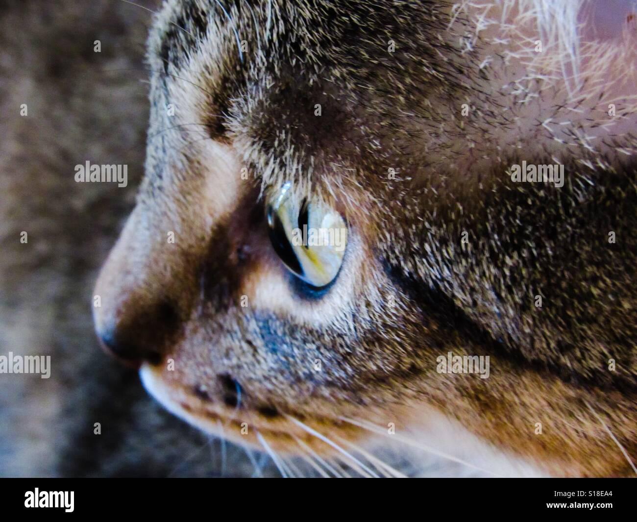 Tabby Fur Close Up Stock Photos Amp Tabby Fur Close Up Stock