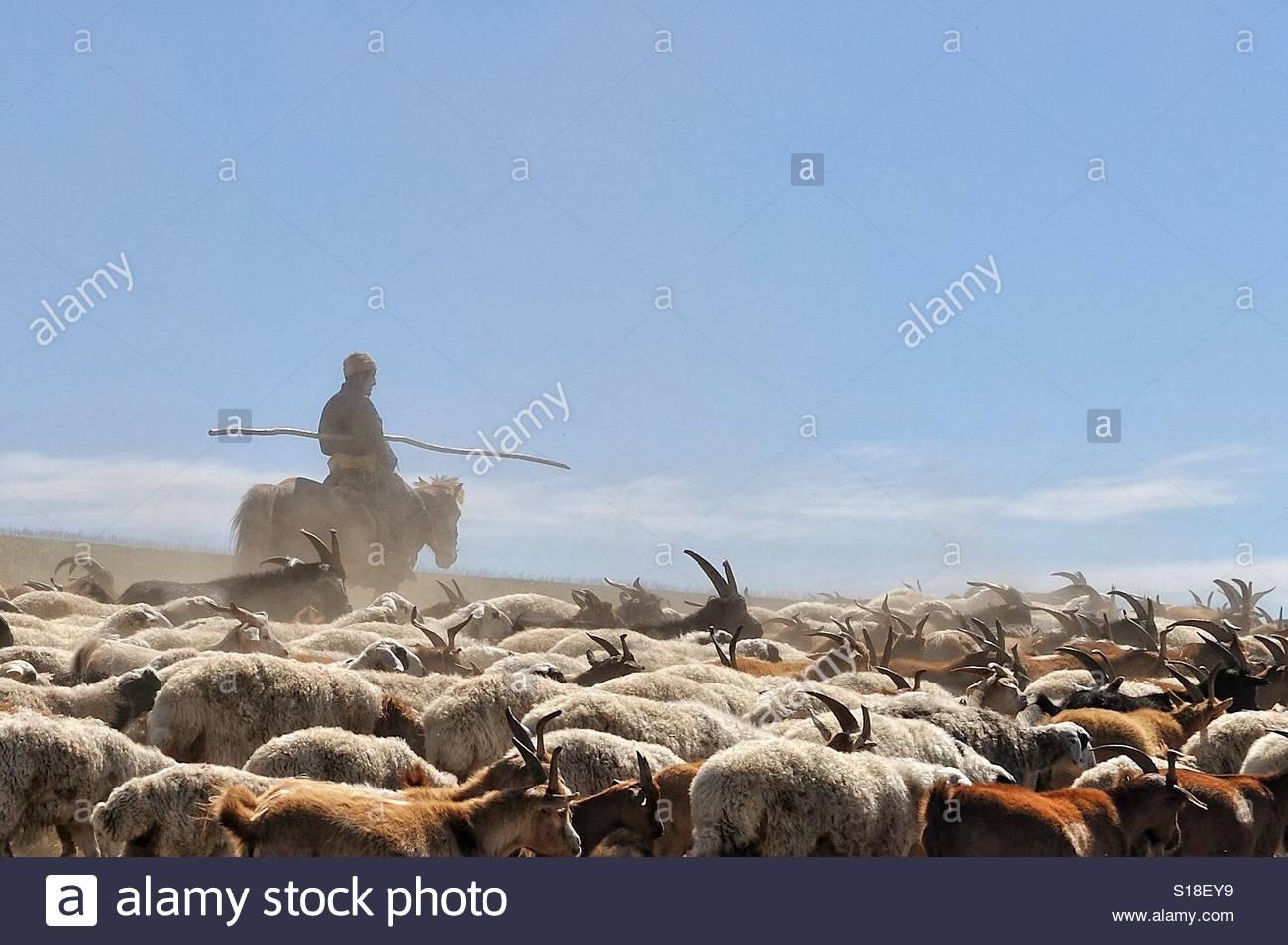 Goat herder - Stock Image