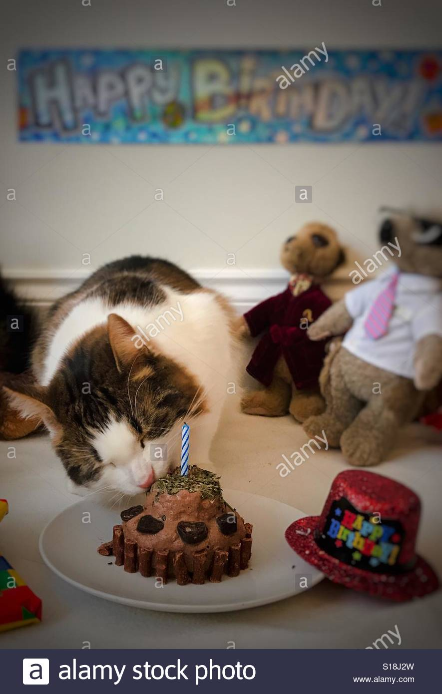 Cat Birthday Cake Stock Photos Images