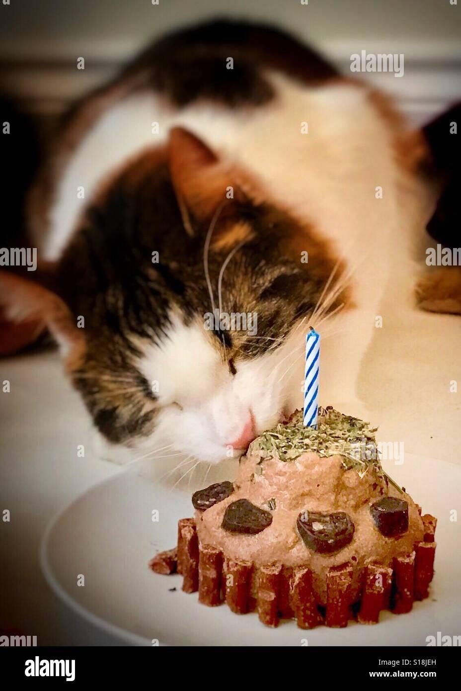 Cat Birthday Cake Stock Photos Cat Birthday Cake Stock Images Alamy