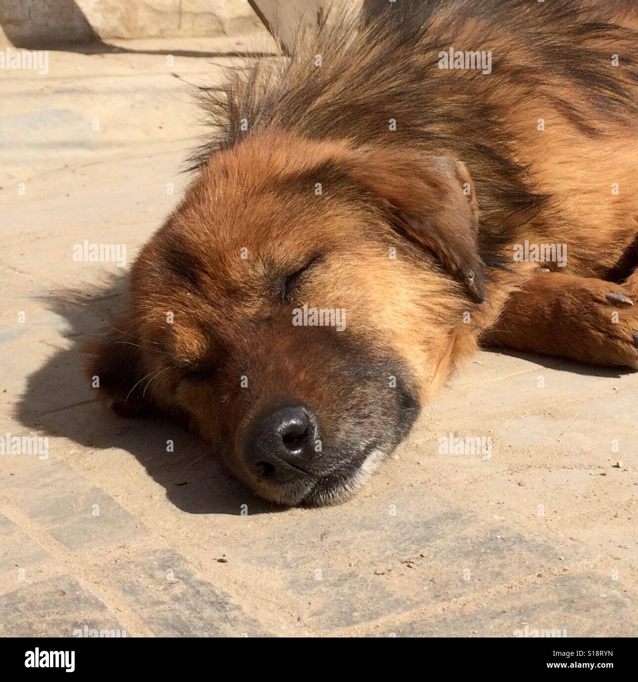 Old dog sleeping in the sun - Stock Image