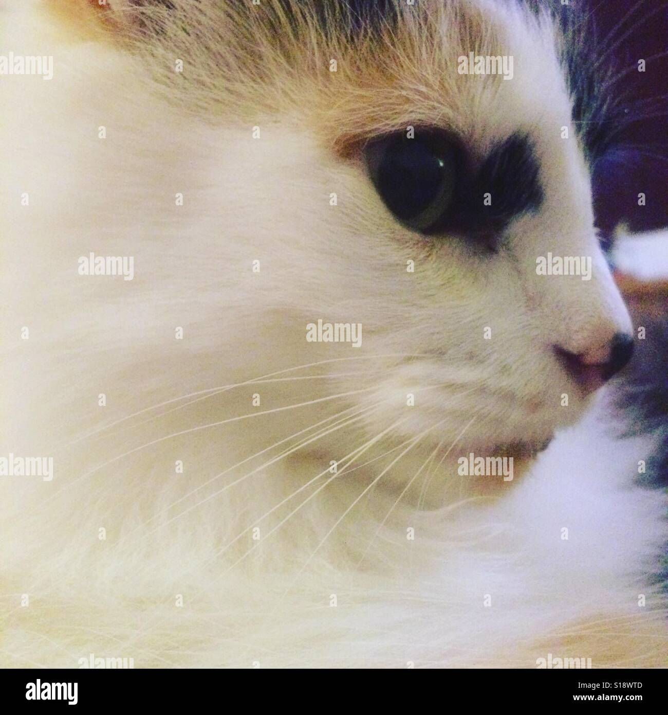 Cats eye! - Stock Image