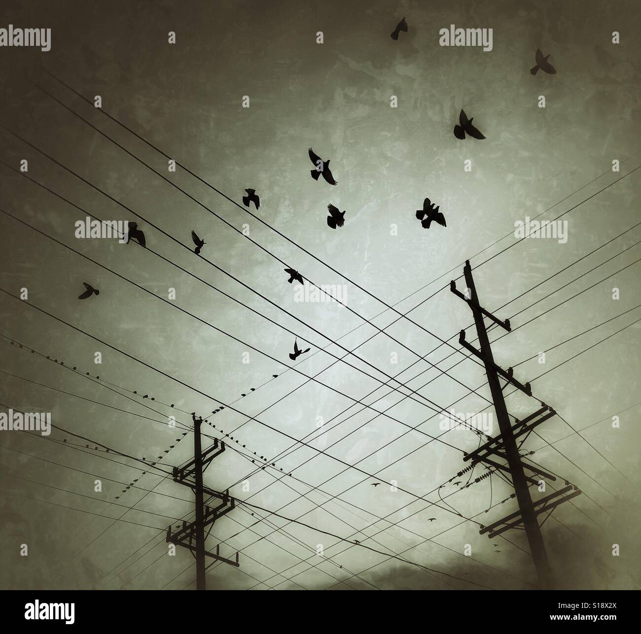 Birds and telephone lines - Stock Image