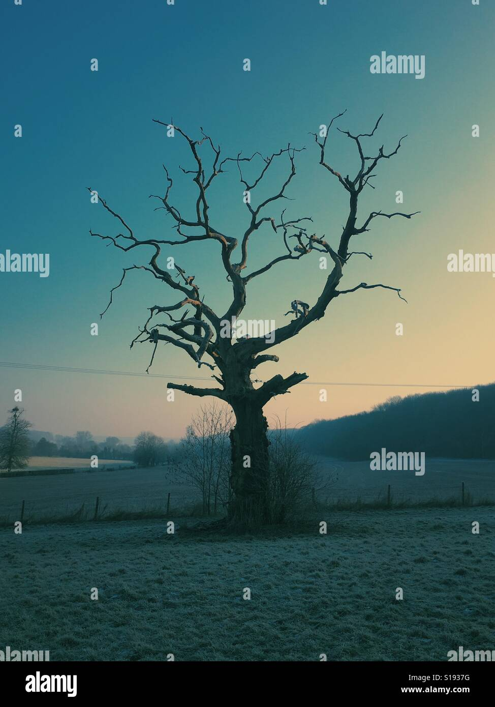 Tree at sunrises. - Stock Image