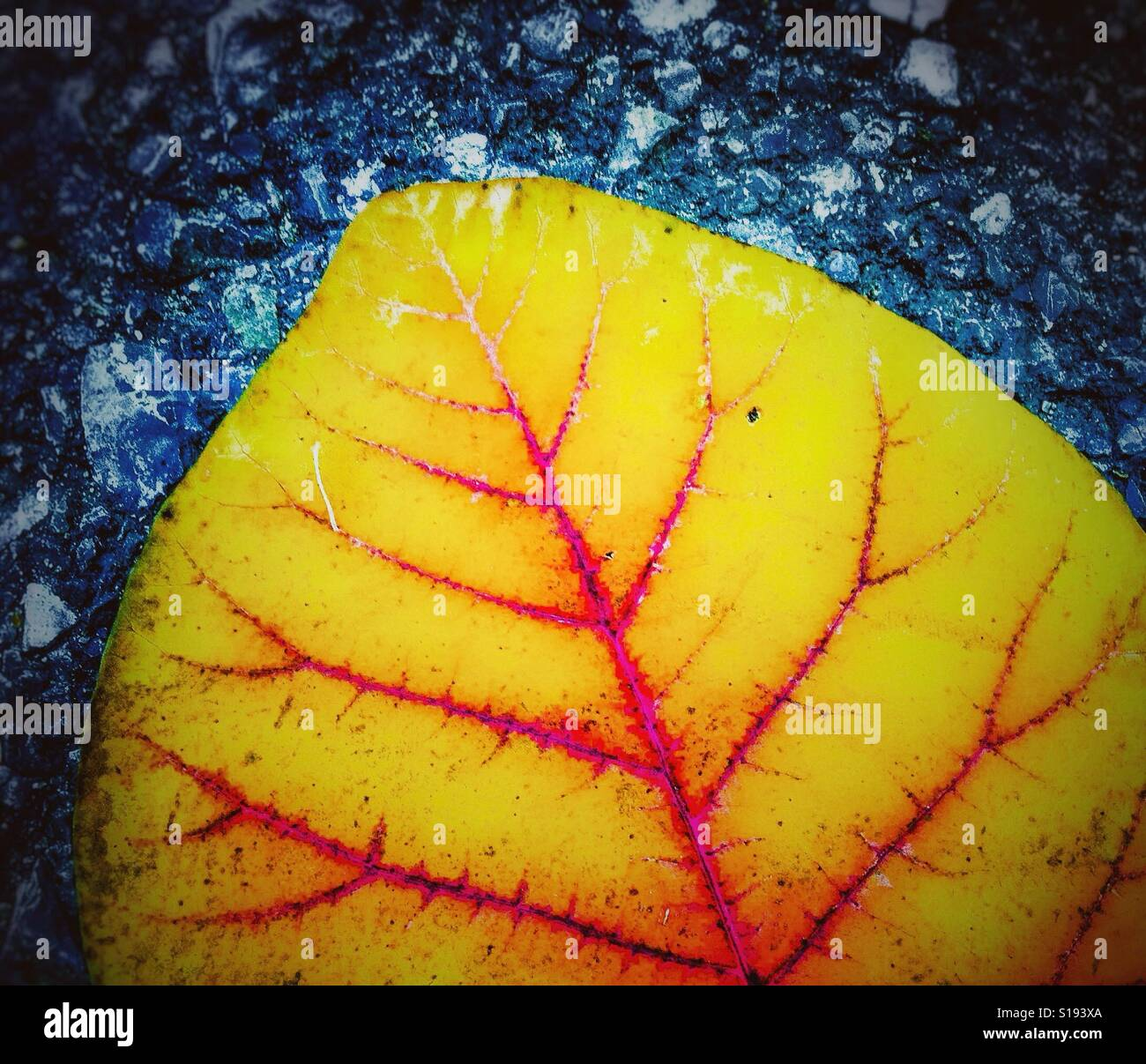 Colorful yellow leaf on asphalt Stock Photo