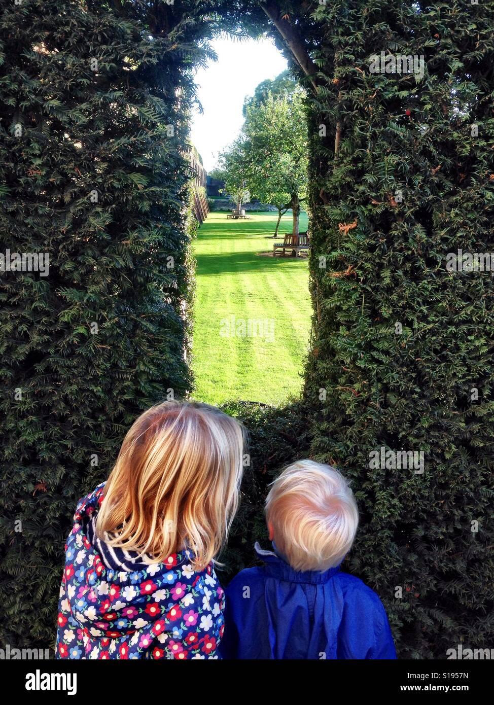 Peeking through the hedge - Stock Image