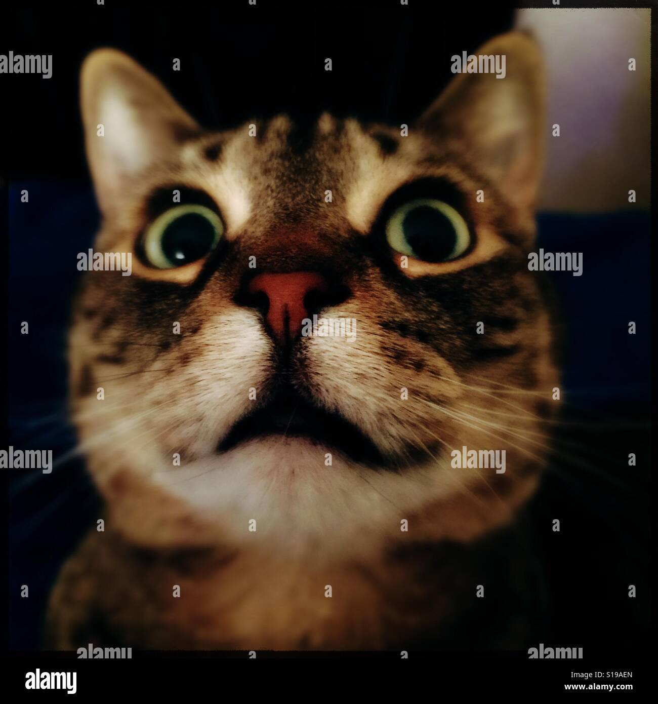 Funny Cat Face Stock Photos Amp Funny Cat Face Stock Images