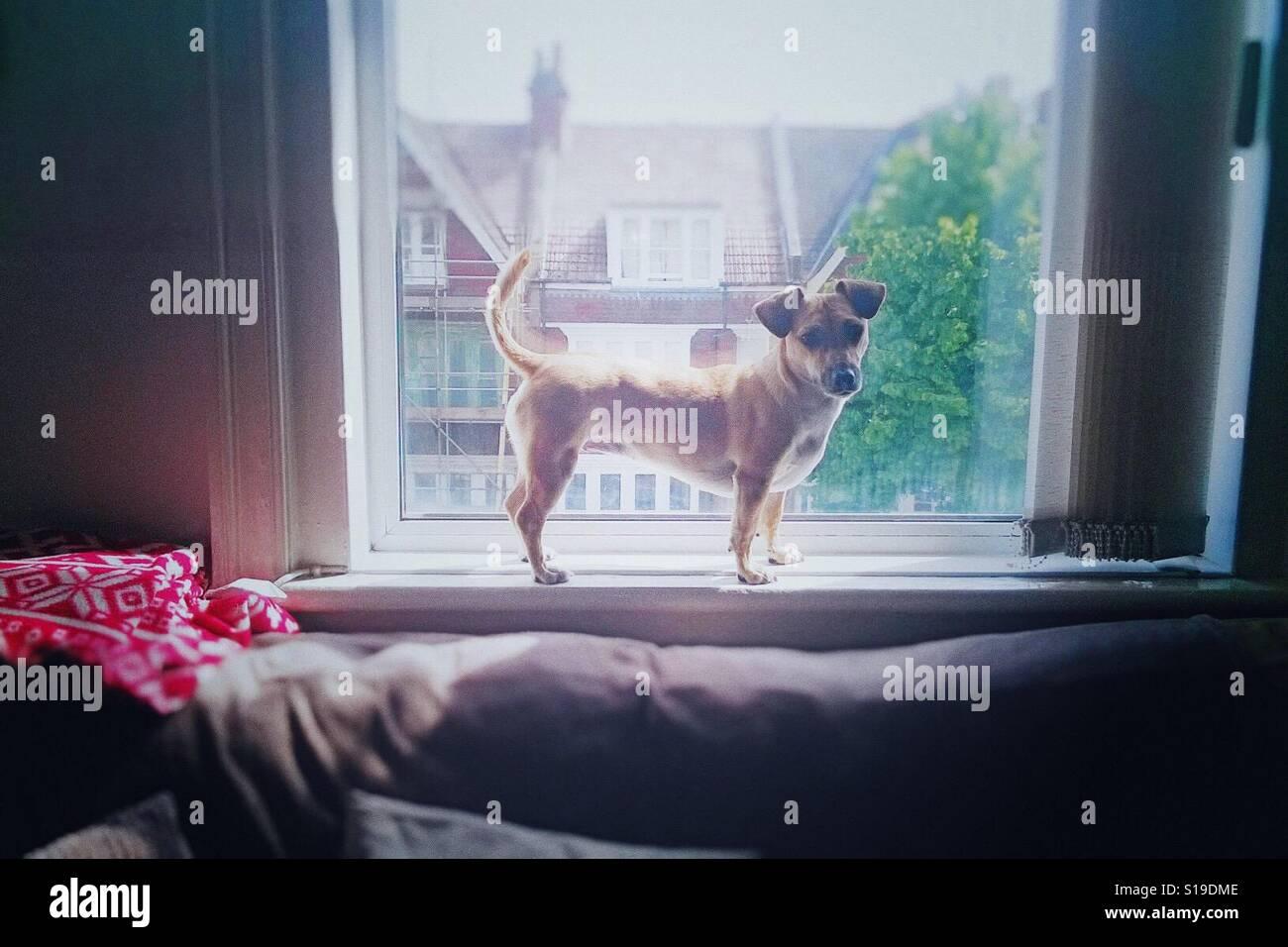 Doggy in window Stock Photo