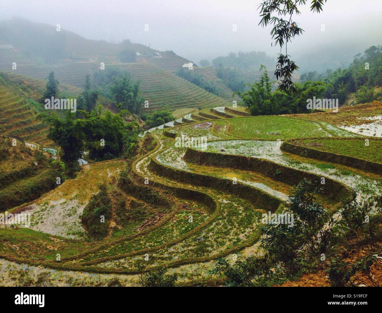 Rice terraces in the mountains - Stock Image