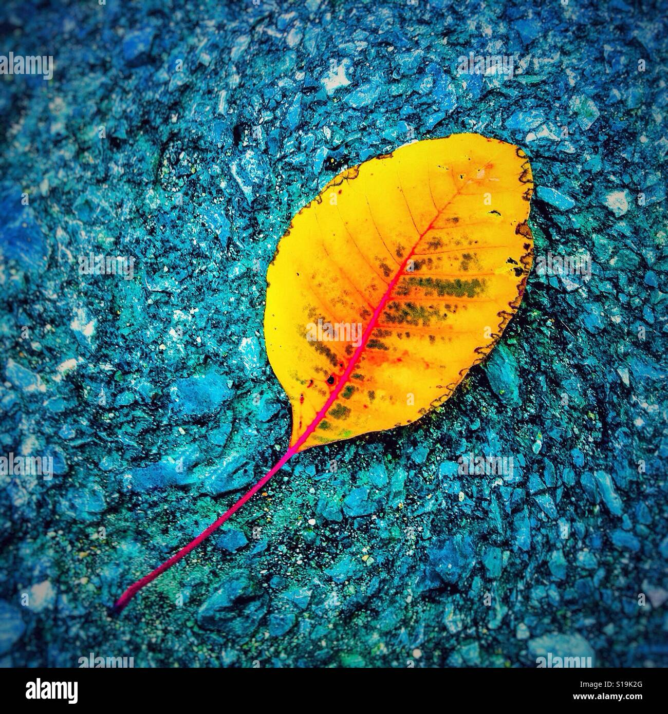 Yellow leaf on blue background Stock Photo