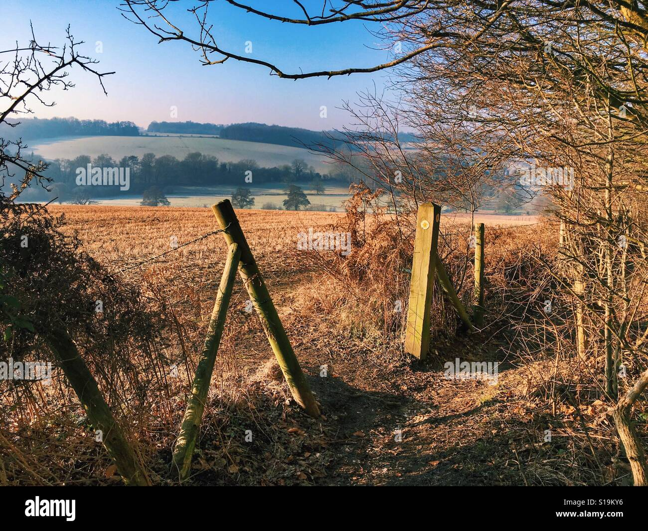A walk in the English countryside, the Chilterns. - Stock Image