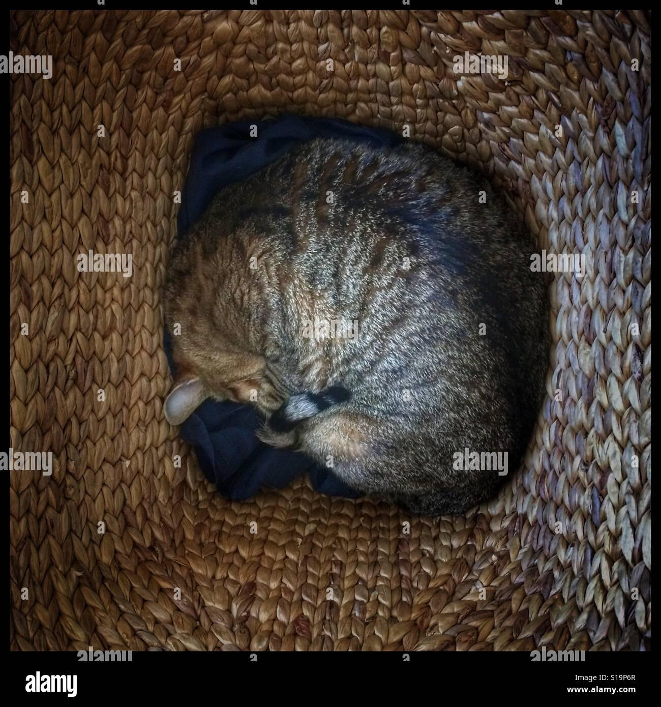 cat laundry basket stock photos cat laundry basket stock images